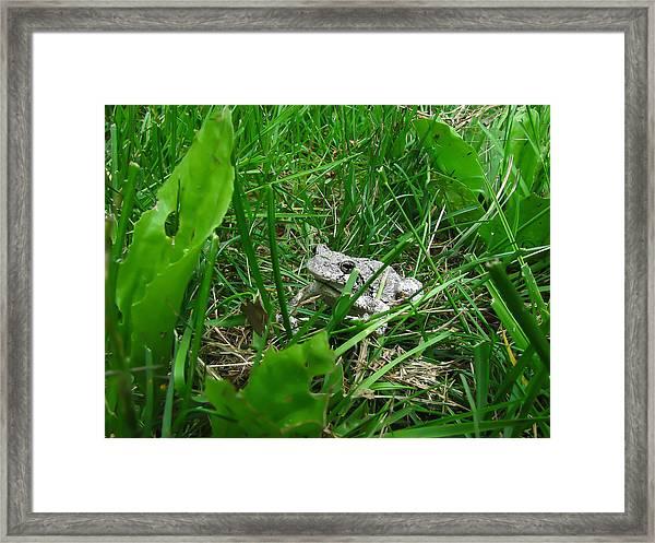 Little Frog Big Voice Framed Print
