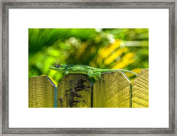 Little Green Visitor Framed Print