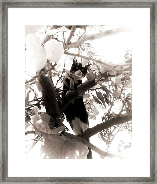 Little Kitty Framed Print