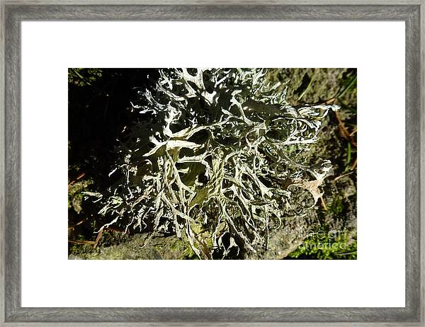 Little Labyrinth Framed Print