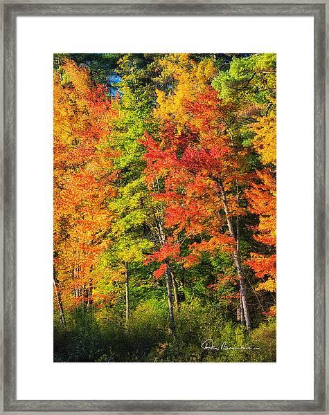 Little Lake Foliage 0515 Framed Print