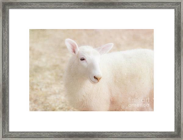 Little Lamb Framed Print