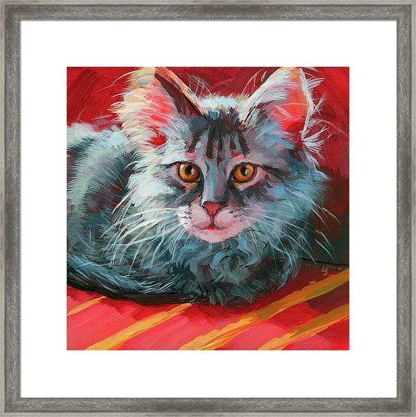 Little Meow Meow Framed Print