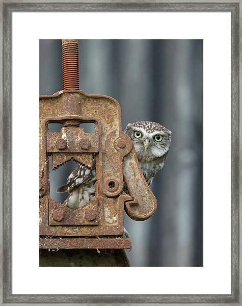 Little Owl Peeking Framed Print