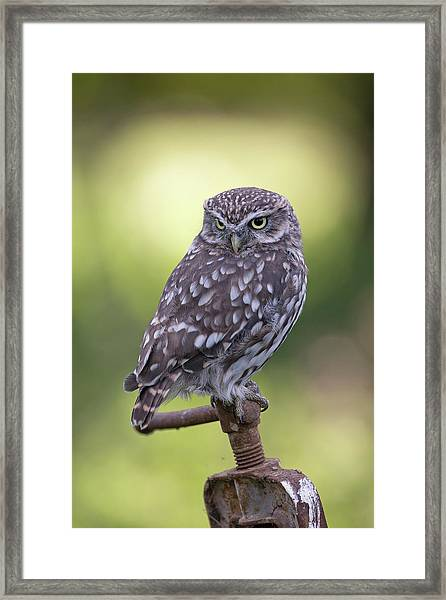 Little Owl Pipe Bender Framed Print