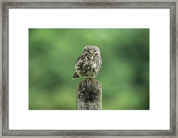 Little Owl Stare Framed Print