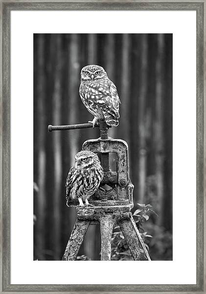 Little Owls Black And White Framed Print