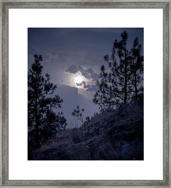 Little Pine Framed Print