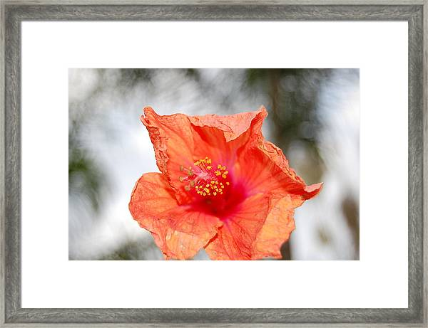 Little Rough Around The Edges Framed Print by Rozalia Toth