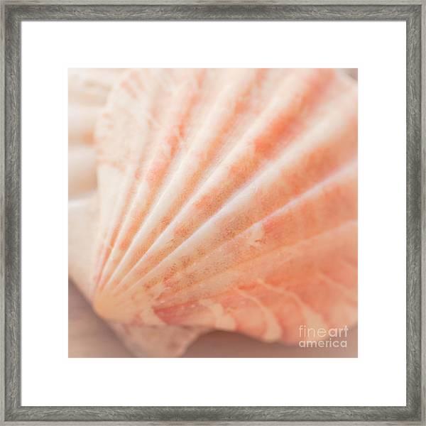 Little Seashell Framed Print