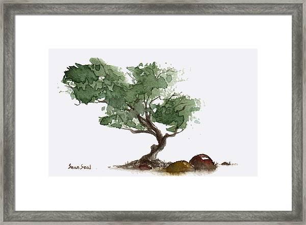Little Tree 1 Framed Print