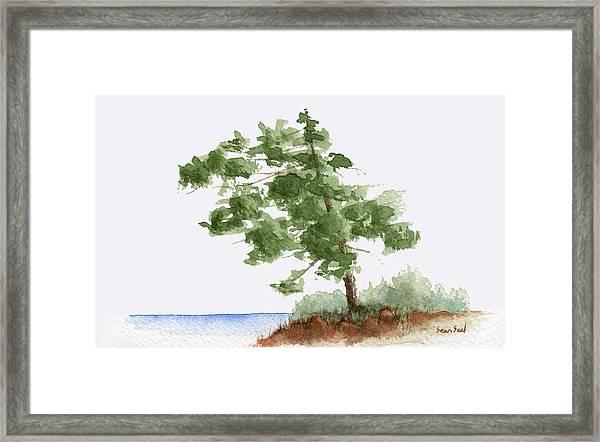 Little Tree 3 Framed Print