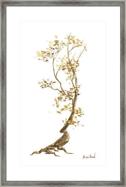 Little Tree 57 Framed Print by Sean Seal