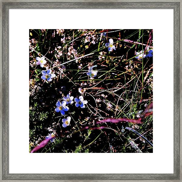Framed Print featuring the photograph Little Twinkles by HweeYen Ong