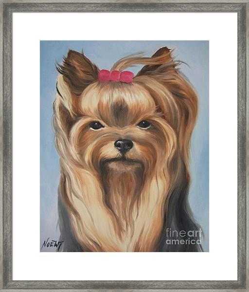 Little Yorkshire Princess Framed Print