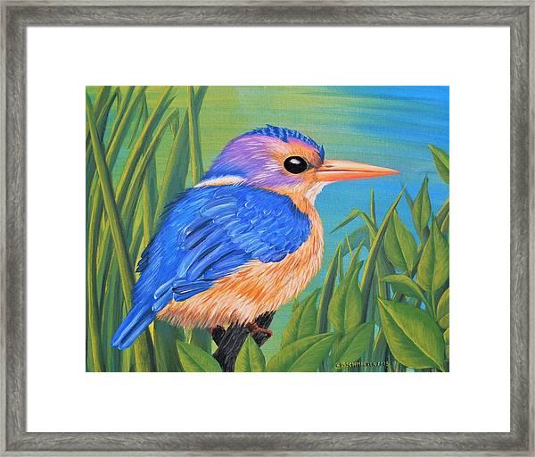 Litttle King Of The Fishers Framed Print