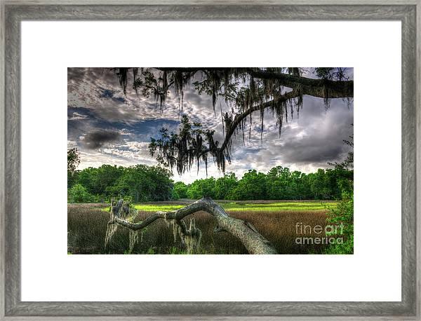 Live Oak Marsh View Framed Print