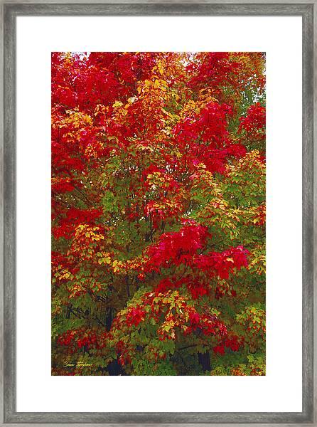 Living Color Framed Print