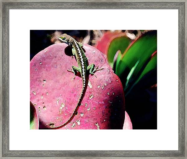 Lizard On Leaf Framed Print