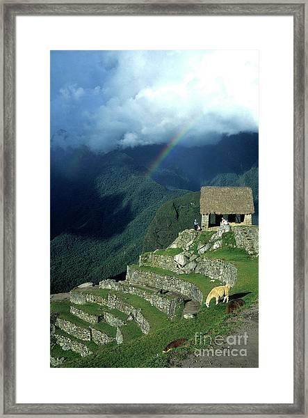 Llama And Rainbow At Machu Picchu Framed Print