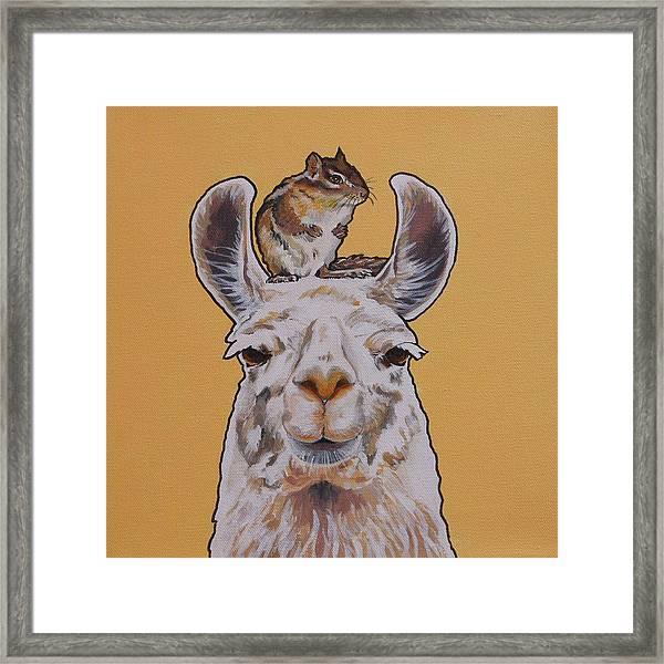 Llois The Llama Framed Print