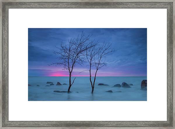 Lm Trees Framed Print