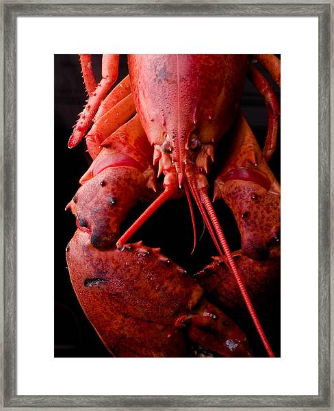 Lobster Framed Print
