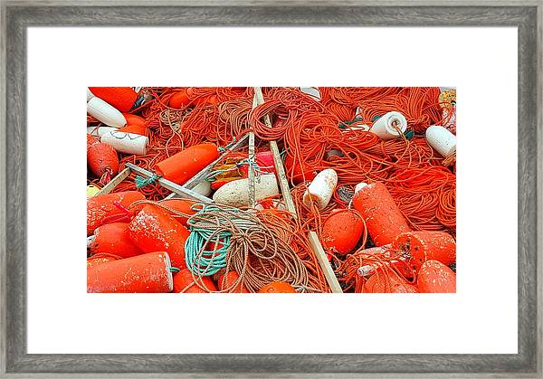 Lobster Season Framed Print