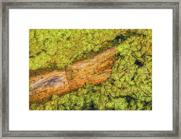 Log In Algae Framed Print