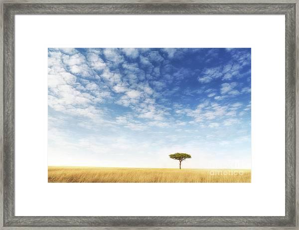 Lone Acacia Tree In The Masai Mara Framed Print