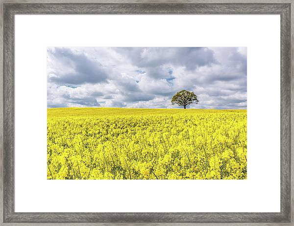 Framed Print featuring the photograph Lone Beauty by Nick Bywater