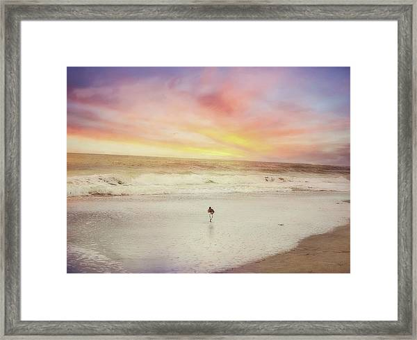 Lone Bird At Sunset Framed Print