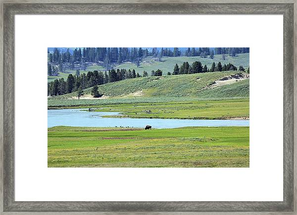 Lone Bison Out On The Prairie Framed Print