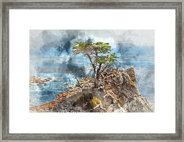 Lone Cypress In Monterey California Framed Print