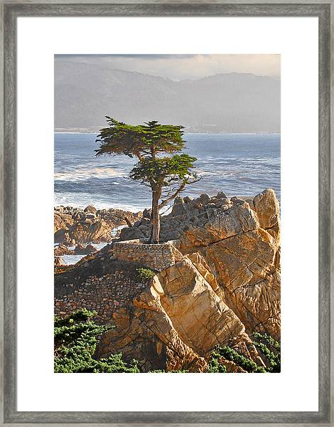 Lone Cypress - The Icon Of Pebble Beach California Framed Print