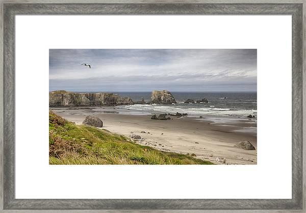 Lone Gull - Bandon Beach Framed Print