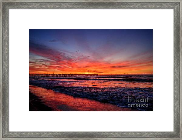 Framed Print featuring the photograph Lone Gull by DJA Images