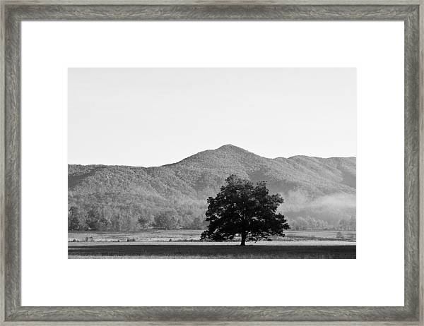 Lone Mountain Tree Framed Print