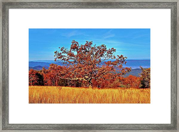 Lone Mountain Tree Framed Print