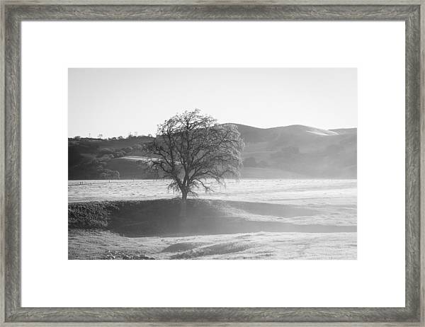 Lone Oak, Clearing Fog, San Andreas Rift Valley Framed Print