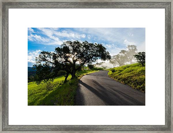 Lone Oak On Figueroa Mountain Road Framed Print