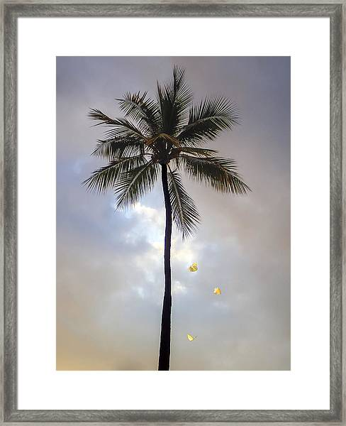 Lone Palm Tree Framed Print