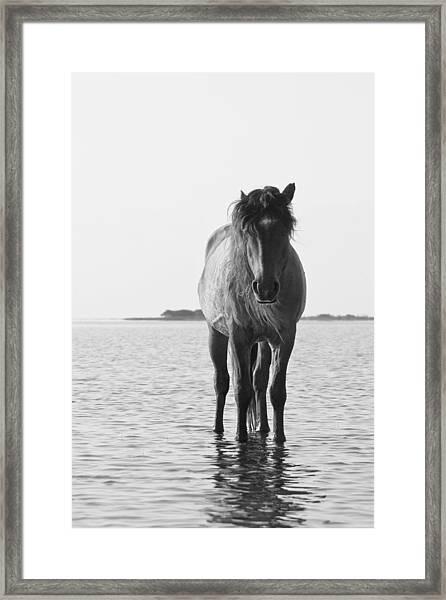 Lone Stallion Framed Print