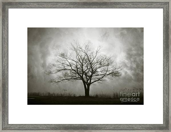 Lone Tree And Clouds Framed Print