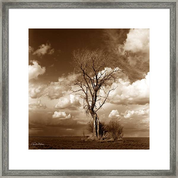 Lone Tree- Brown Tone Framed Print