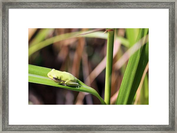 Lone Tree Frog Framed Print