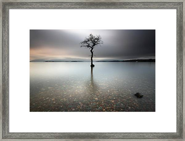 Lone Tree Loch Lomond Framed Print