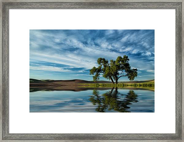 Lone Tree Pond Reflection Framed Print