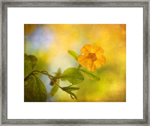 Lone Yellow Flower Framed Print