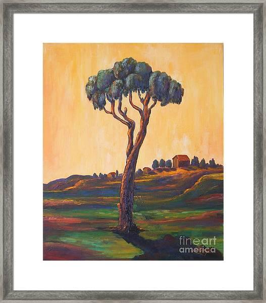 Lonely Eucalyptus Framed Print by Ushangi Kumelashvili